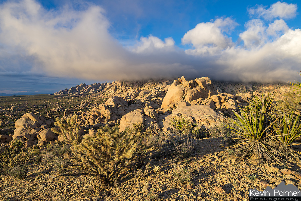 The weather changed quickly on this windy morning in Mojave National Preserve. It looked like it was going to stay sunny for awhile. But then the clouds descended and obscured the Granite Mountains.<br /> <br /> Date Taken: 1/31/14