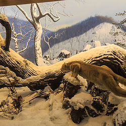 Wildlife taxidermy scene on display at the Pennsylvania State Museum in Harrisburg.