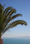 Palm tree overlooking Gulf of Tunis, Sidi Bou Said, Tunisia