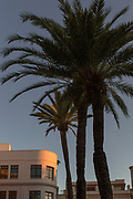 View of palm trees with building in background, Cadiz, Andalusia, Spain