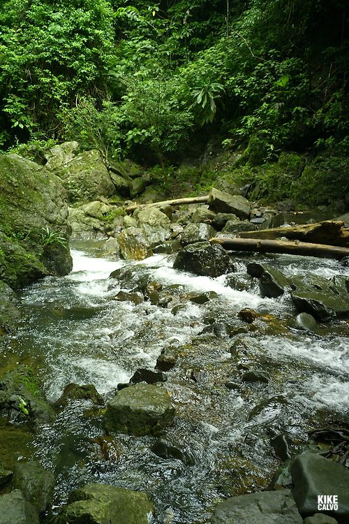 Chagres National Park was established to protect the Rio Chagres watershed which supplies 80% of the water needed to operate the Panama Canal as well as the consumption requirements of the city. It is the wildest of the reserves near to the canal and this area is home to many animals including jaguars and ocelots. The Rio Chagres is the only river in the world that empties into two oceans.
