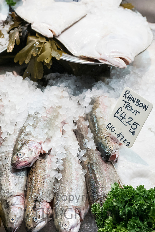 Fresh Rainbow Trout, Oncorhynchus mykiss, on sale at St Helier Fish Market in Jersey, Channel Isles
