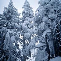 SKIING, Mount Bachelor, OR. Allan Pietrasanta powder skiing in storm (MR)