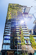 General Views showing One Central Park which is built around Chippendale Green. The bulding itself was designed by award-winning Parisian architect Jean Nouvel and the vertical gardens designed by the artist and botanist Patrick Blanc.Heliostat reflecting light onto the vertical garden wall, Chippendale, Sydney, Australia.
