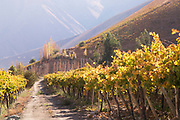 View of vineyard on summer day, Elqui Valley, Chile