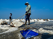 20 FEBRUARY 2019 - BAN LAEM, PHETCHABURI, THAILAND: A salt worker pulls her full basket into position for her yoke on one of the first days of the 2019 salt harvest in Ban Laem, Thailand. The workers use a bamboo yoke to carry the baskets of salt into a warehouse. Ban Laem's salt fields are expanding because salt harvesters in Samut Sakhon and Samut Songkhram,  which are closer to Bangkok, are moving to Ban Laem as their land is turned into industrial parks.     PHOTO BY JACK KURTZ