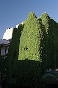 Ivy covered building in Bellavista, Santiago, Chile