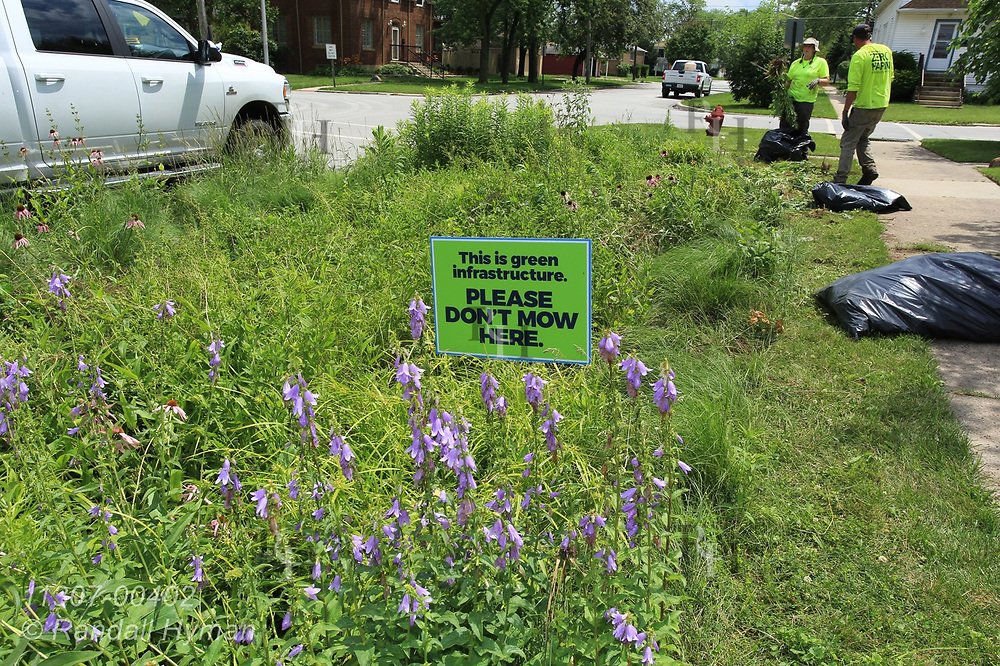 Cardno workers help maintain rain gardens in Chicago South Side neighborhood to control stormwater runoff into Lake Michigan; Blue Island, Illinois.