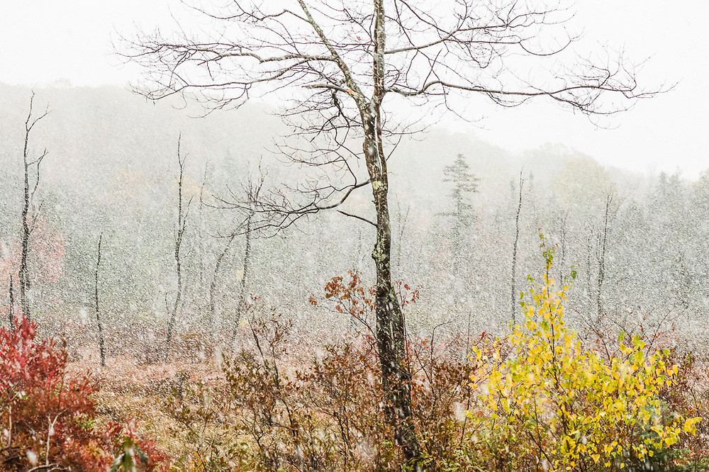 Autumn snowstorm, October, Cheshire County, New Hampshire, USA