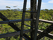 Ascend the public Diamond Tree, a 51-meter tall Karri (Eucalyptus diversicolor) mounted with a fire lookout. Drive 10 km south of Manjimup on the South Western Highway, in Western Australia. Growing up to 90 meters, Karri trees stand amongst the tallest species on earth.