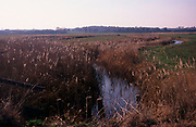 A912J9 Reedbeds and bullrushes in marshland drainage ditch, Boyton, Suffolk, England