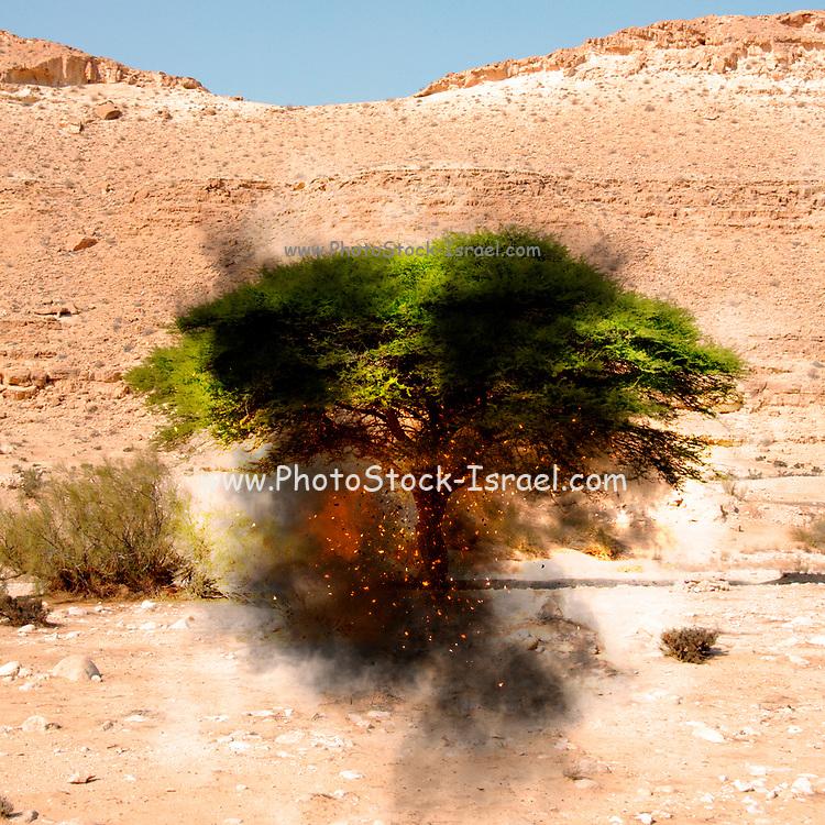 Digitally enhanced image of a Biblical burning Bush (Book of Exodus[3:1–4:17]) in the desert