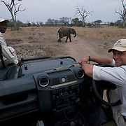 Our guides at Londolosi pause to an elephant cross the road. South Africa.