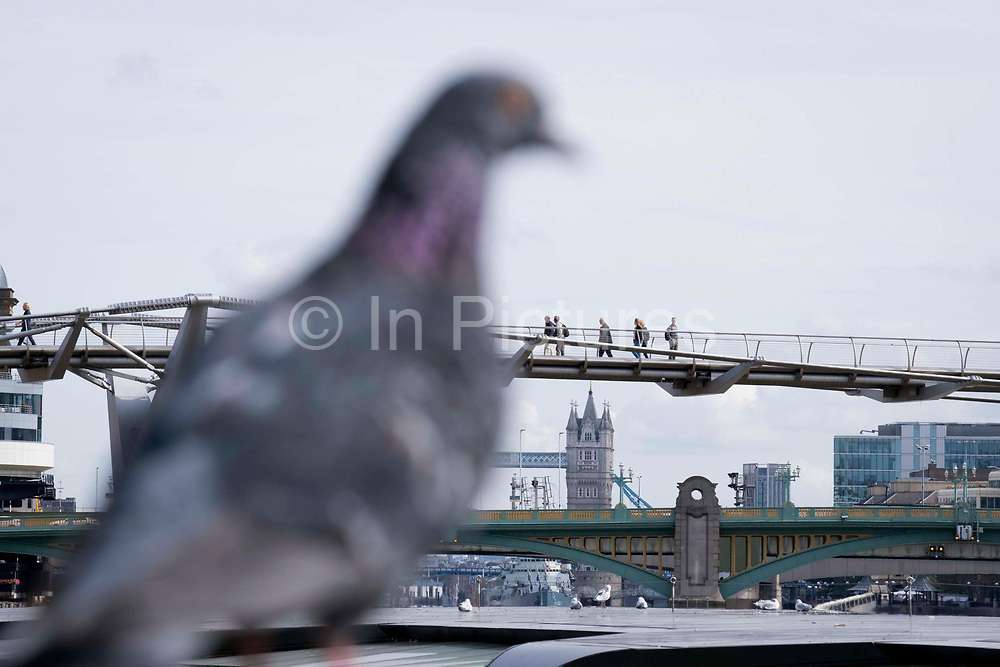 A foreshortened perspective of a pigeon and Tower Bridge in the far distance, and the nearer green Southwark Bridge, and Londoners cross the Millennium Bridge over the river Thames, on 13th September 2021, in London, England. Londons newest river crossing for 100-plus years coincided with the Millennium in 2000. It was hurriedly finished and opened to the public on 10 June 2000 when an estimated 100,000 people crossed it to discover the structure oscillated so much that it was forced to close 2 days later. Over the next 18 months designers added dampeners to stop its wobble but it already symbolised what was embarrassing and failing in British pride. Now the British Standard code of bridge loading has been updated to cover the swaying phenomenon, referred to as Synchronous Lateral Excitation.