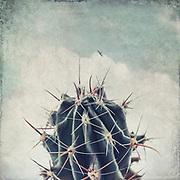 Cactus still against a textured sky