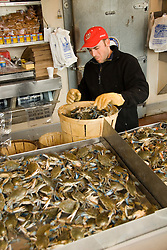 Washington DC, Food, fresh fish and shellfish market on Maine Ave, selling Chesapeake Bay blue crab and various fish, such as fillet of red snapper, all fresh and live off the boats.  Photo is of man sorting blue crab by size and gender..Photo  wash99323-70657..Photo copyright Lee Foster, www.fostertravel.com, lee@fostertravel.com, 510-549-2202.