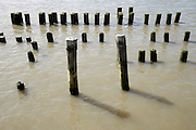 wooden pillar supports of an disappeared dock standing in the water