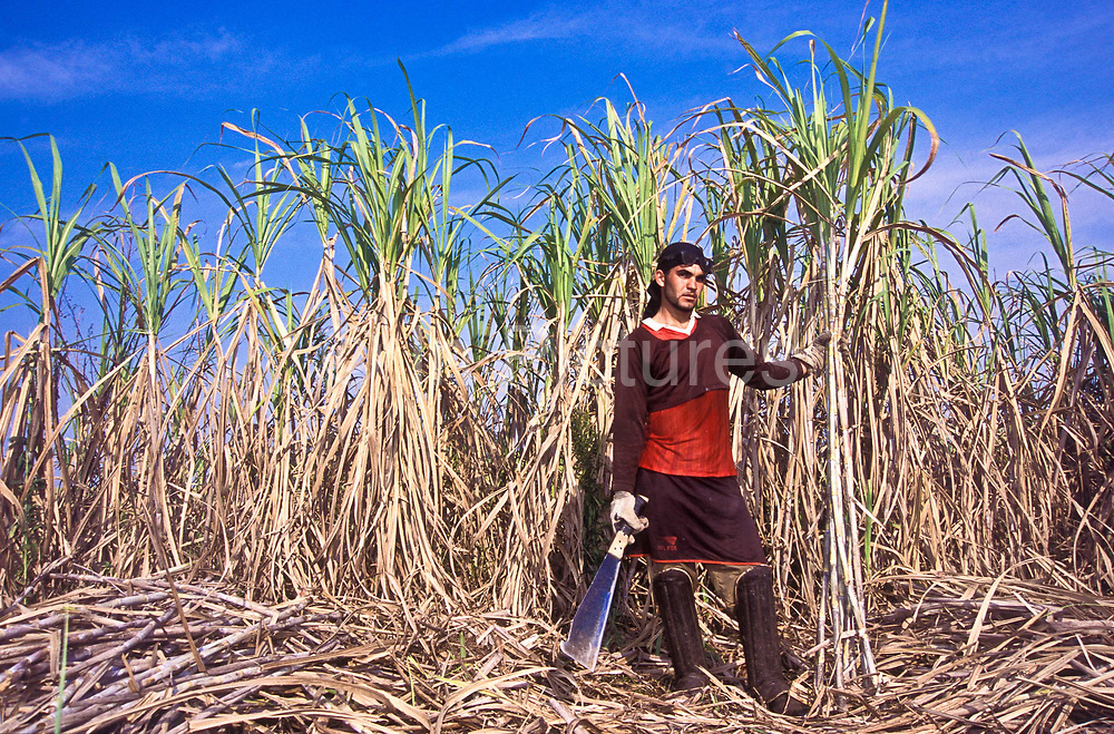"Portrait of a Sugar Cane worker on a large ""fazenda"" ranch in the state of  Sao Paulo, Brazil"