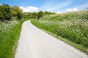 Road climbing chalk downland Allington Down, Wiltshire, England