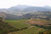 Vineyard. Domaine Matassa, Calces, Roussillon, France