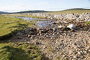 Stream sinking underground in limestone rock, Malham, Yorkshire Dales national park, England, UK
