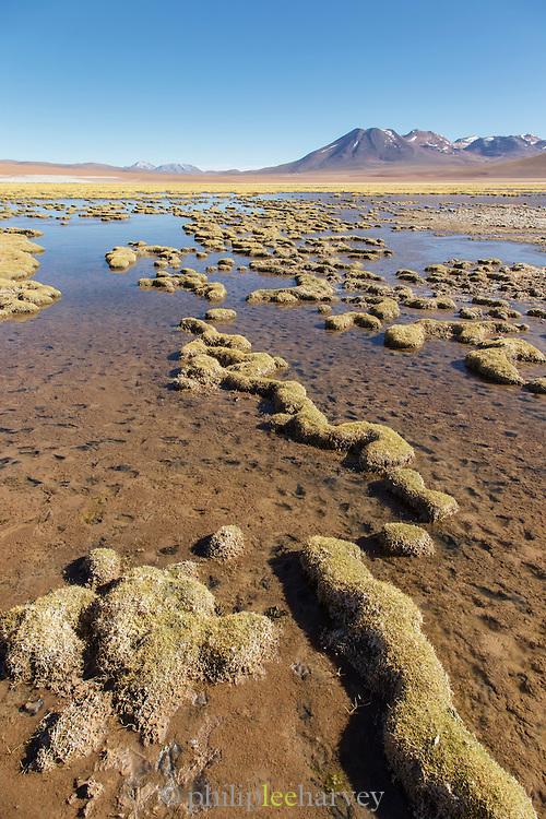 Lake Near Tatio Geysers, Antofagasta Regain, Atacama Desert, Chile, South America