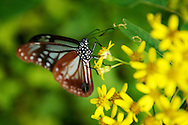 My best ever butterfly photo!!!  .Jialuo Lake, May, 2013