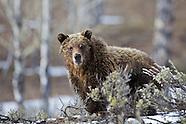 Grand Teton wildlife and landscape