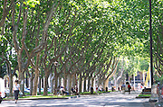 Promenade de Platanes park. Perpignan, Roussillon, France.