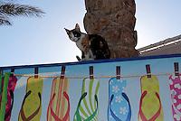 Katt og plakat av slipperser