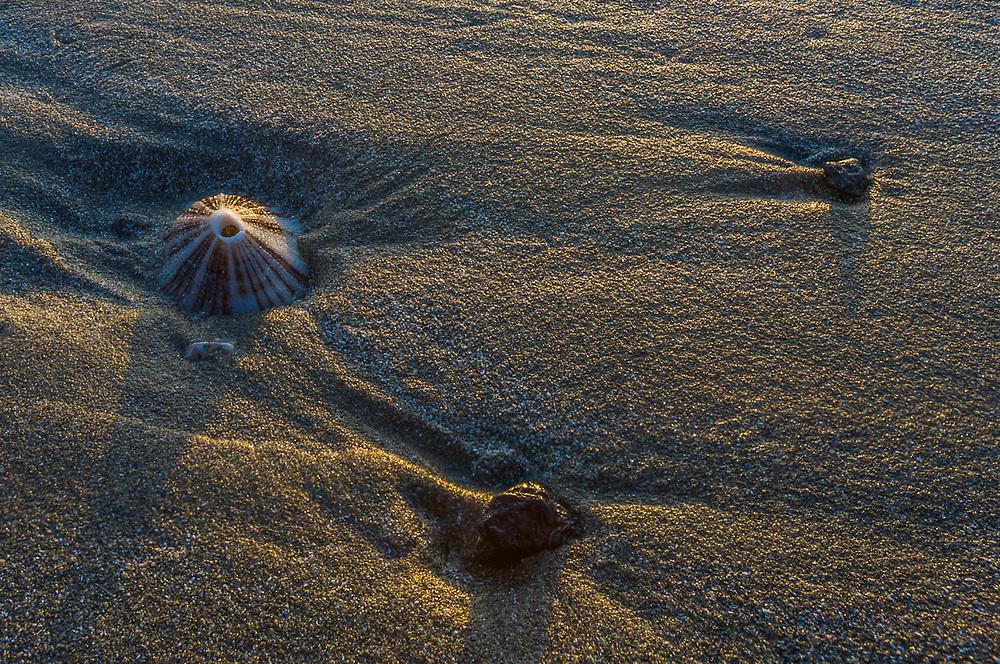 Beach design, afternoon light, May, Pacific Ocean beach, Olympic Peninsula, Washington, USA