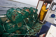 Local fisherman Neil Cameron sails to another location laden with creels filled with Velvet and Green Crab between Fionnphort and Iona, Isle of Mull, Scotland. The contents of 500 creels is taken every week by truck and sold to Spain. On each line are 25 creels that are spaced out in different areas of the nearby bays. The main fishing on the Ross of Mull, Ulva Ferry and Tobermory is now is commercial shell fishing with baited traps(creels) for lobsters (homarus gamarus), edible brown crabs( cancer pagurus), Prawn (Norwegian Lobster) and velvet swimming crab (necora puber). Scallop dredgers and Prawn trawlers also operate from both ends of the island, dragging the seabed for their catch. Before the late 1960s shell fishing with creels was generally carried out on a seasonal or part time basis allied to crofting, farming or another shore based job.