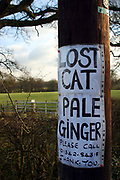 A Lost cat poster stuck up on a lamp post in Surrey.