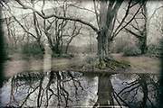 Trees reflected in water, The New Forest, Hampshire, processed to emulate wet plate technique.
