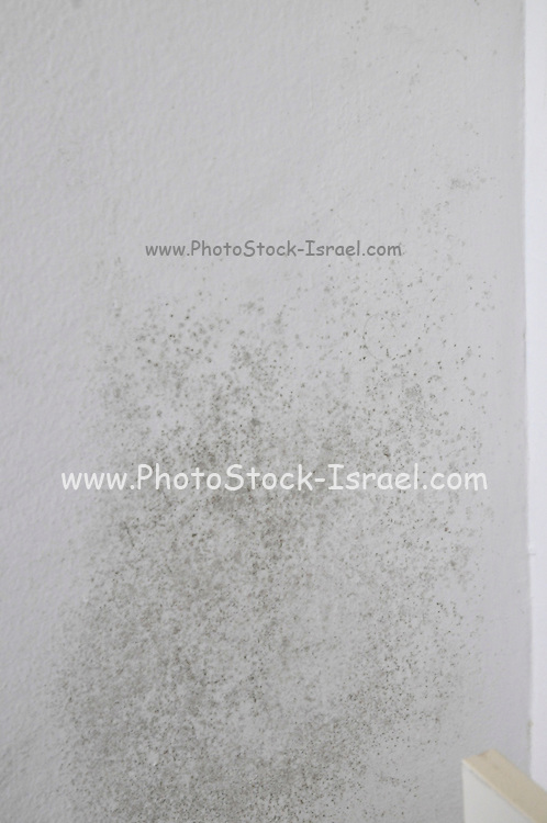 Mold grows on a bedroom wall due to dampness