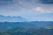 Mountainous Jungle panorama seen from Bukit Patoi's summit, Peradayan Forest Reserve, Brunei
