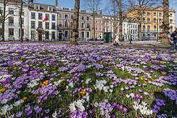 De Haag centrum, Zuid Holland, Netherlands
