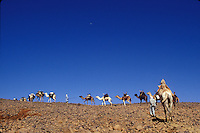 Tuareg camel caravan in Algeria