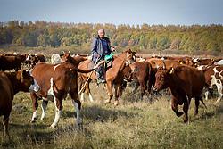 May 1, 2019 - Tambov District, Tambov region, Russia - Shepherd herding cows (Credit Image: © Demian Stringer/ZUMA Wire)