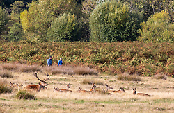 © Licensed to London News Pictures. 05/10/2020. London, UK. A herd of deer gather as walkers enjoy the mild temperatures and autumnal colours in Richmond Park today after Storm Alex lashed the UK with 3 days of rain. Weather forecasters predict sunshine and showers with a high of 16c for the rest of the week. Photo credit: Alex Lentati/LNP
