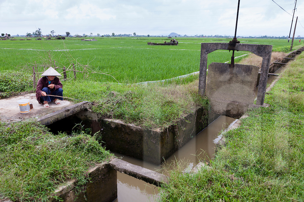 Irrigation and drainage system implemented in rice fields to enable second harvesting and prevent floods and salination of agricultural areas, Dong Hung District, Thai Binh Province, Vietnam, Southeast Asia