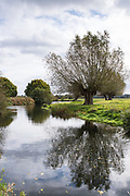 River Stour and English willow trees in Suffolk Coasts and Heaths Area of Outstanding Natural Beauty, near East Bergholt, UK