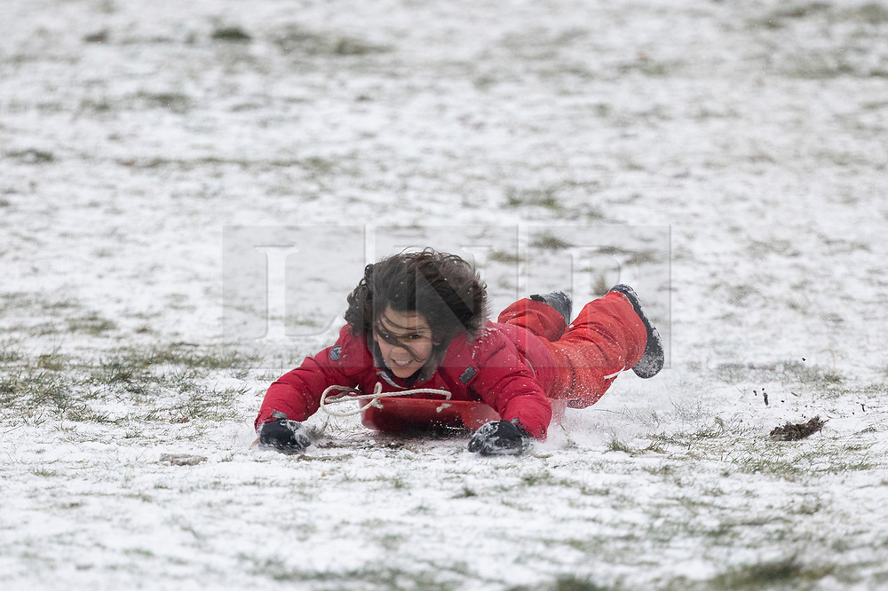 © Licensed to London News Pictures. 08/02/2021. London, UK. A member of the public sleds in a snowy Greenwich park in South East London. Snow is expected for large parts of the UK and a yellow weather warning is in place in parts of England as Storm Darcy hits the UK. Photo credit: George Cracknell Wright/LNP