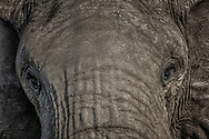The higher spirit lives within us all. Ganesh's spirit lives in this godly elephant in the Maasai Mara.