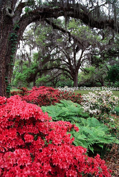 Mackay Gardens, Tallahassee, Florida