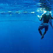 A fisherman tends to a seine net containing tuna. Image made off North Sulawesi, Indonesia.