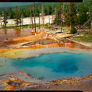 Firehole Spring, Yellowstone National Park. 4x5 Kodak Ektar 100. <br /> photo by Nathan Lambrecht