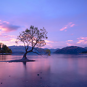 Lone tree on Lake Wanaka at sunset