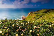 Blossoming coast of Portugal