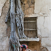 Man riding past tree roots growing through a wall in Old Havana